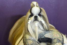 Китайские породы собак – в центре внимания на Вестминстерском дог-шоу