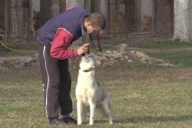 Забота о собаках в тюрьме: как заключённых готовят к жизни на свободе