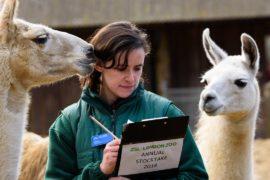 Выманить и подсчитать: в Лондонском зоопарке переписывают животных
