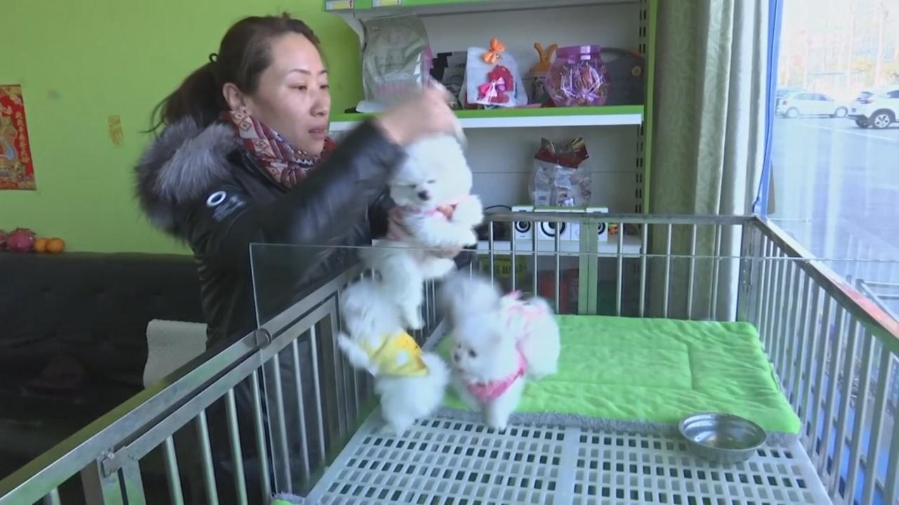 Китайцы всё больше ценят собак чистокровных пород