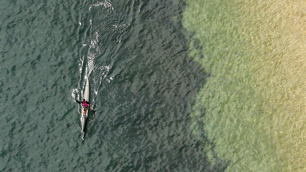 Каякер спасся после встречи с 40-килограммовой акулой