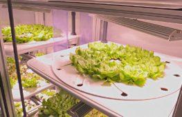 В берлинском ресторане зелень выращивают прямо на стене