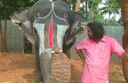 В Индии слониха научилась играть на губной гармонике