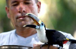 В бывших местах оплота ФАРК находят новые виды животных и растений