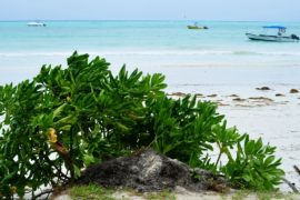 Фонд Леонардо Ди Каприо дал $1 млн на морской заповедник в Индийском океане