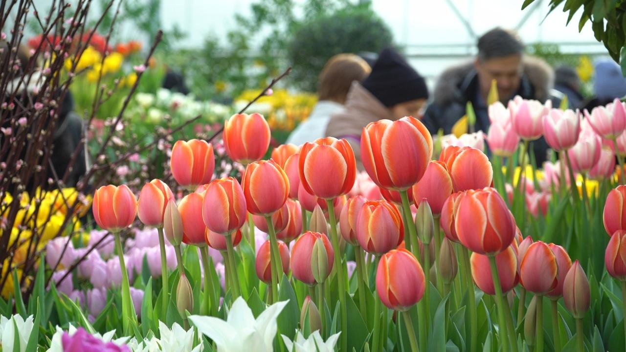 Репетиция весны: в Москве зацвели 10 тысяч цветов