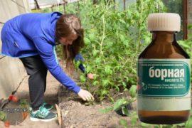Как подкармливать борной кислотой помидоры – секреты и советы