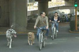 Китайцы хотят запустить велопрокат в Мексике