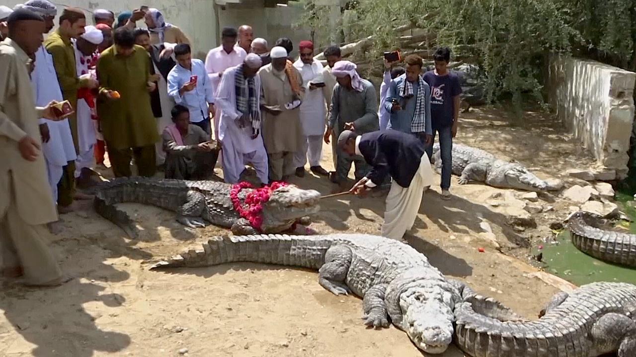 Фестиваль крокодила в Пакистане: кормление рептилий и танцы под барабаны