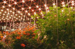 Съедобные цветы и микрозелень выращивают в центре Нью-Йорка