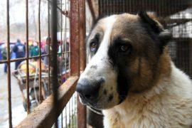 В Индонезии хотят запретить есть собачье мясо