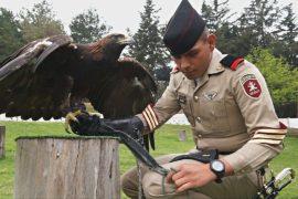 Мексиканские военные помогают сохранять популяцию беркутов