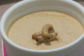 Обед из сверчков и личинок: итальянцев приучают есть насекомых