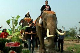 День слона — национальный праздник Таиланда
