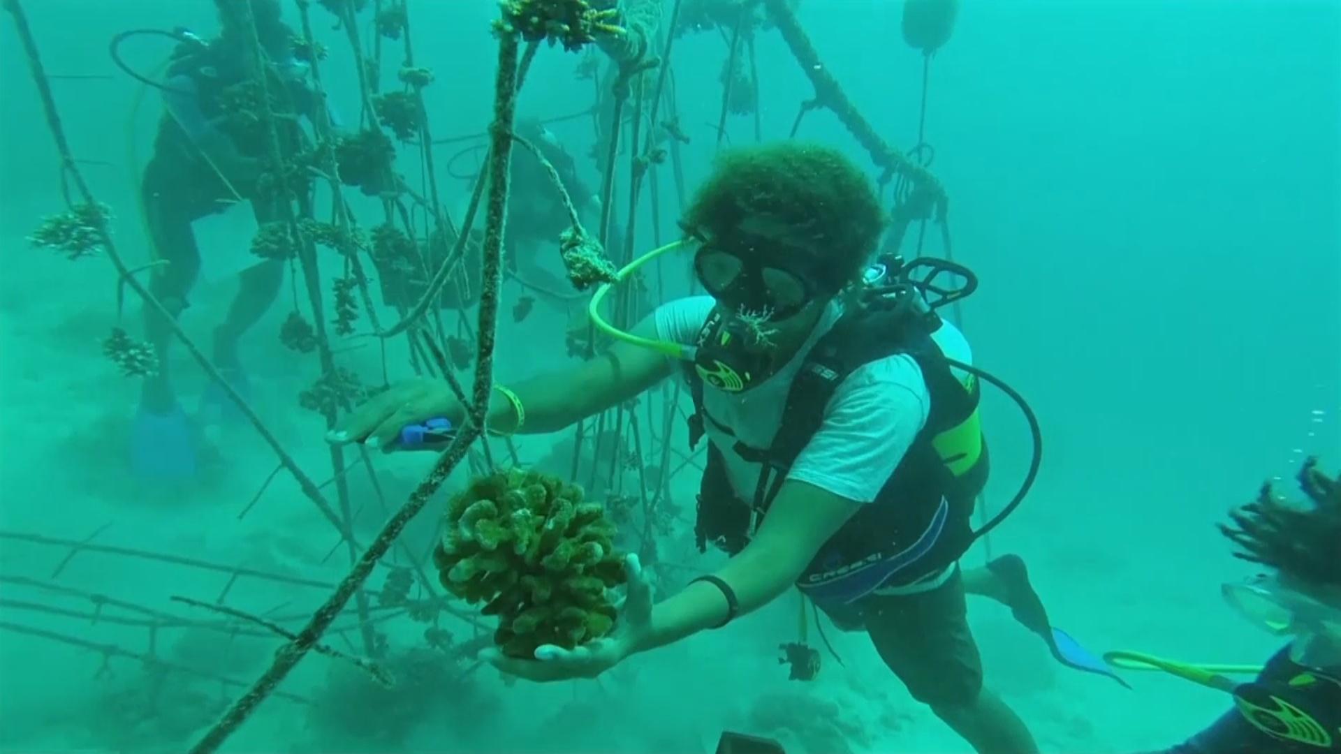 Коралловые фермы на берегу помогают спасти рифы на дне океана