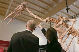 Уникальный скелет птерозавра показали на выставке в Германии