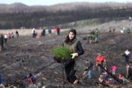 67 тысяч сосен посадили португальцы на месте сгоревшего леса