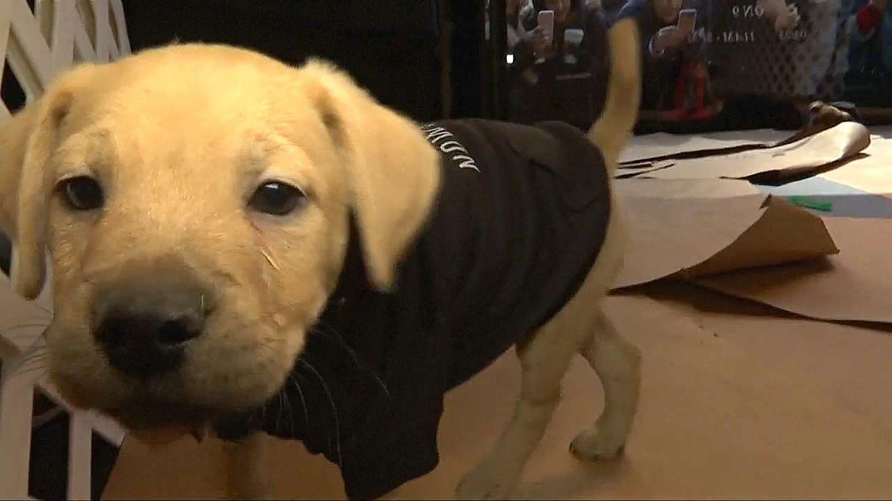 Национальный день щенка в США: собачки в витрине
