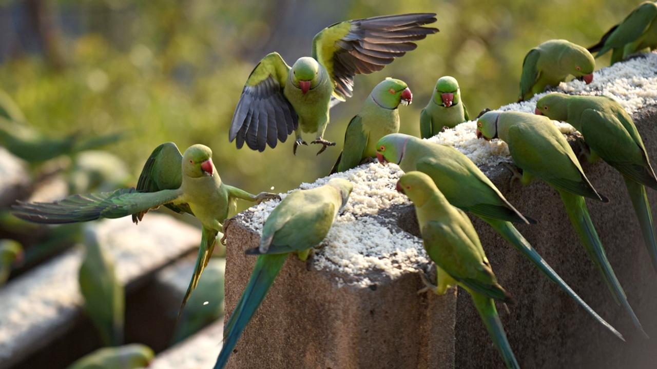 Попугаи облюбовали знаменитое нью-йоркское кладбище