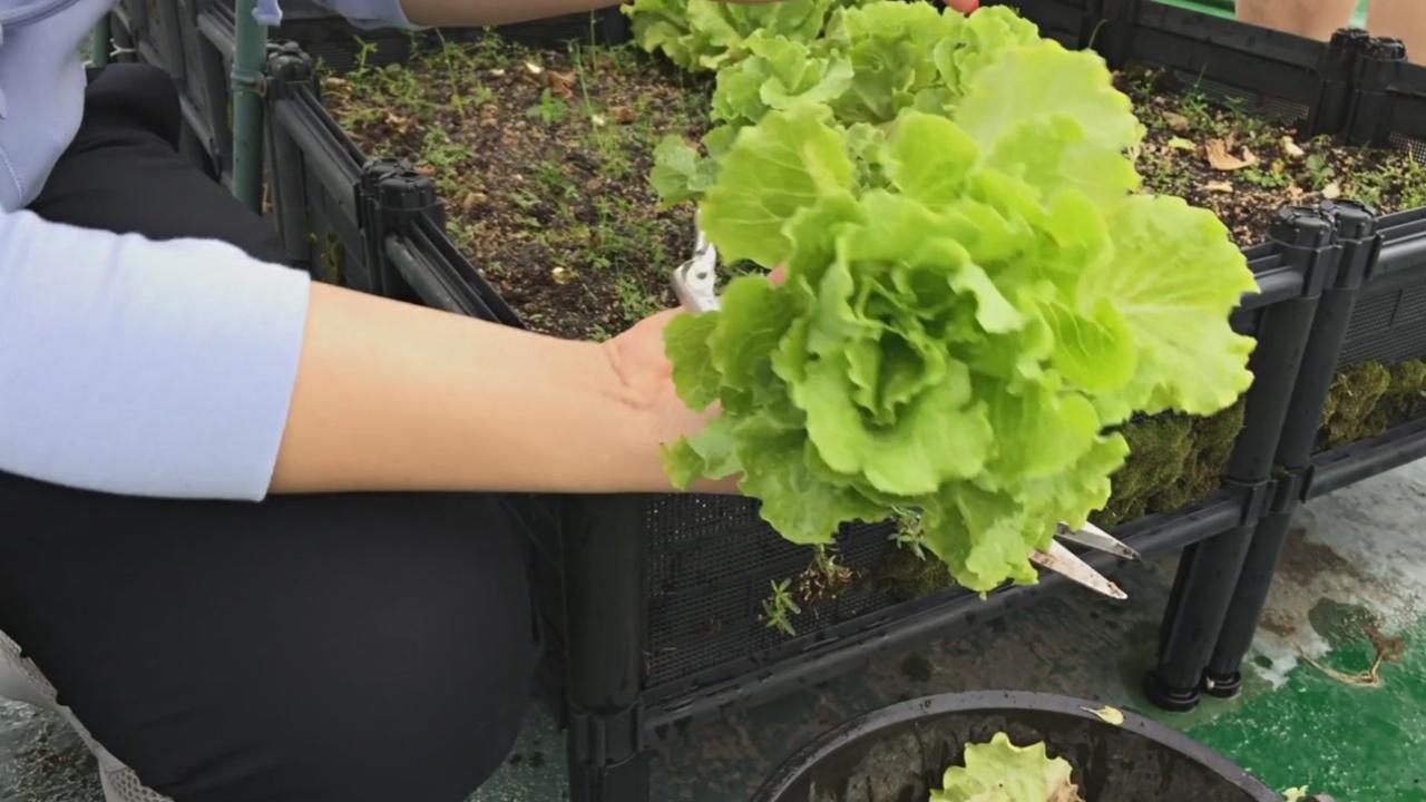 Гонконгцы растят овощи на крышах ради хорошего настроения