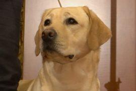 В США названа самая популярная порода собак 2017 года