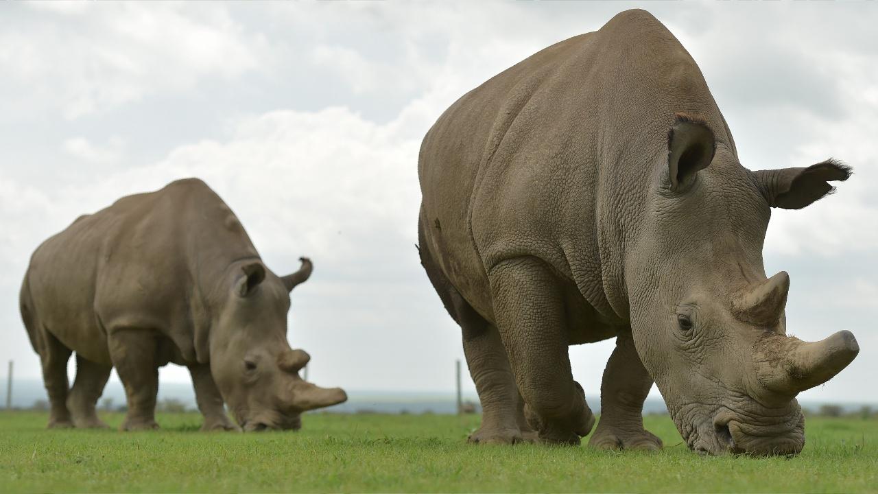 Министр туризма Кении: «За владение рогом носорога нужно сажать пожизненно»