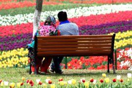 В индийском Кашмире зацвело самое большое в Азии поле тюльпанов