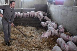 Американские фермеры опасаются ответных пошлин со стороны Китая