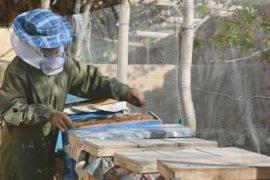 Девушка-афганка преодолела предрассудки общества и разводит пчёл