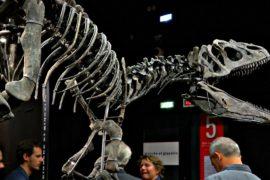 Двух гигантских динозавров продали на аукционе в Париже