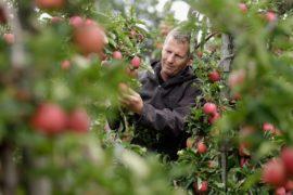 В ЕС хотят защитить фермеров от нечестных торговых практик