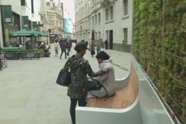 Стена изо мха: как в Лондоне создают оазис из чистого воздуха