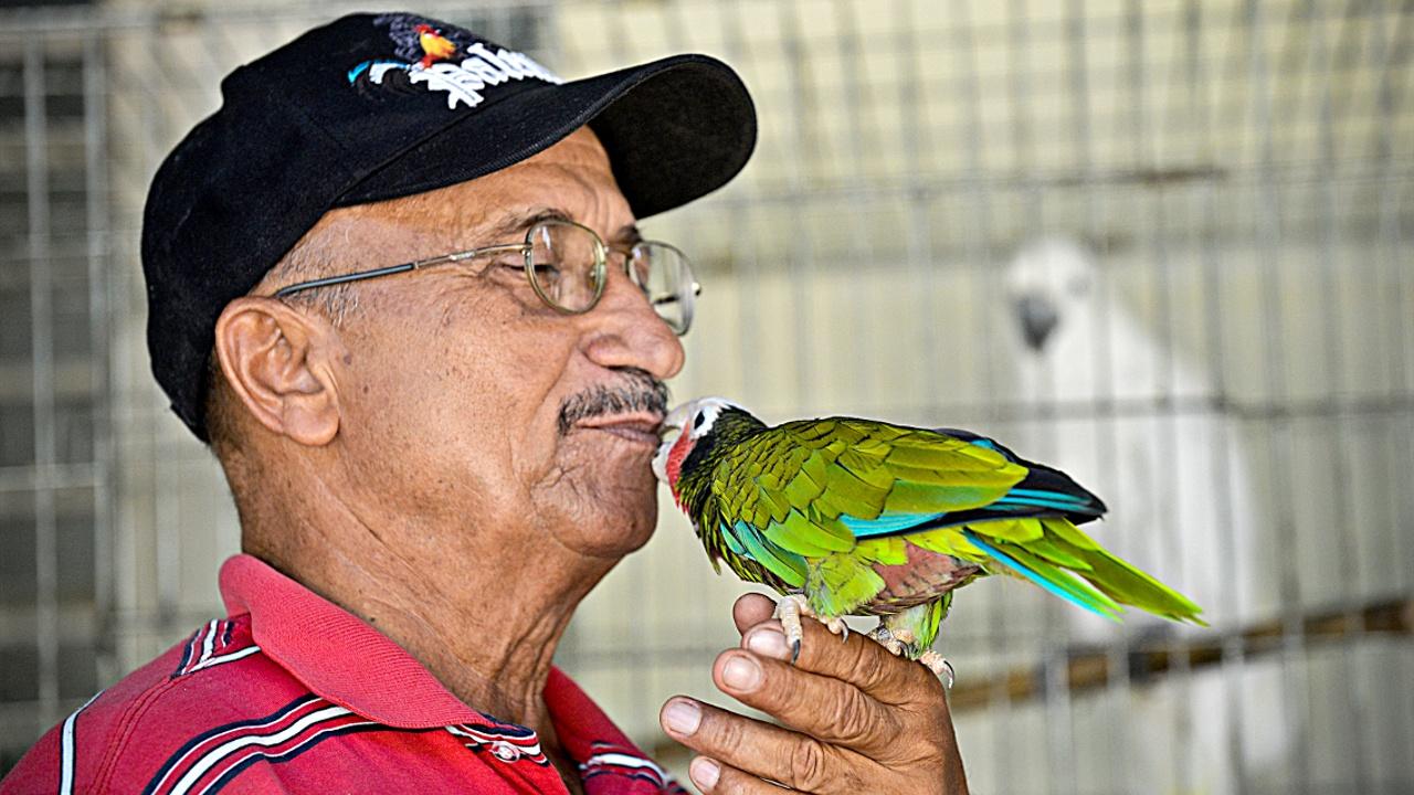 «Чёрный рынок» экзотических птиц процветает на Кубе