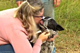 Старый слепой пёс всю ночь охранял 3-летнюю девочку, потерявшуюся в лесу