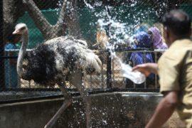 Водой и туманом спасают от жары питомцев индийского зоопарка