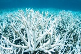 Австралия выделит полмиллиона долларов на защиту Барьерного рифа