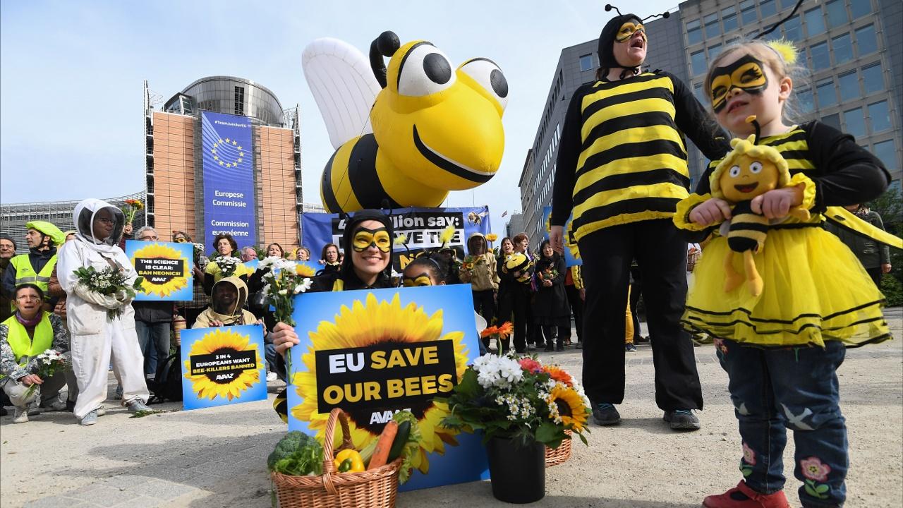 ЕС вводит запрет на пестициды, убивающие пчёл
