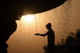 Индия изнывает от аномальной жары