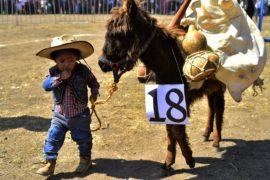 Мексиканцы посвятили 1 мая трудолюбивым ослам