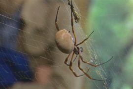 Лондонский зоопарк помогает избавиться от боязни пауков