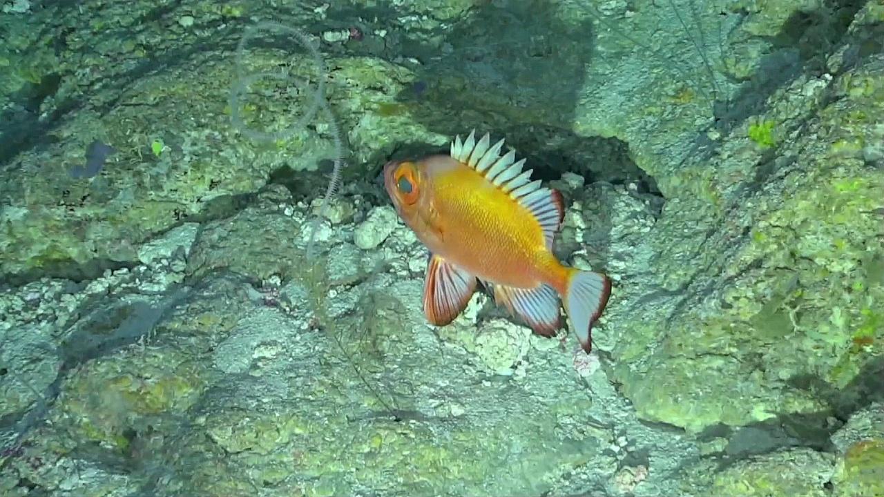 У Бермудских островов нашли 100 новых видов морских организмов