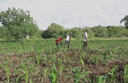 «Удалённое фермерство»: приложение помогает следить за посевами