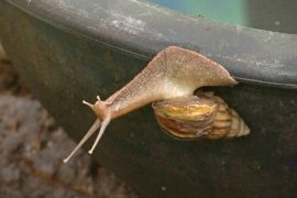 Счастливые улитки: зачем фермеры окружают заботой моллюсков