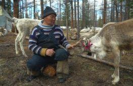 В Монголии оленеводы-кочевники сохраняют традиционный образ жизни