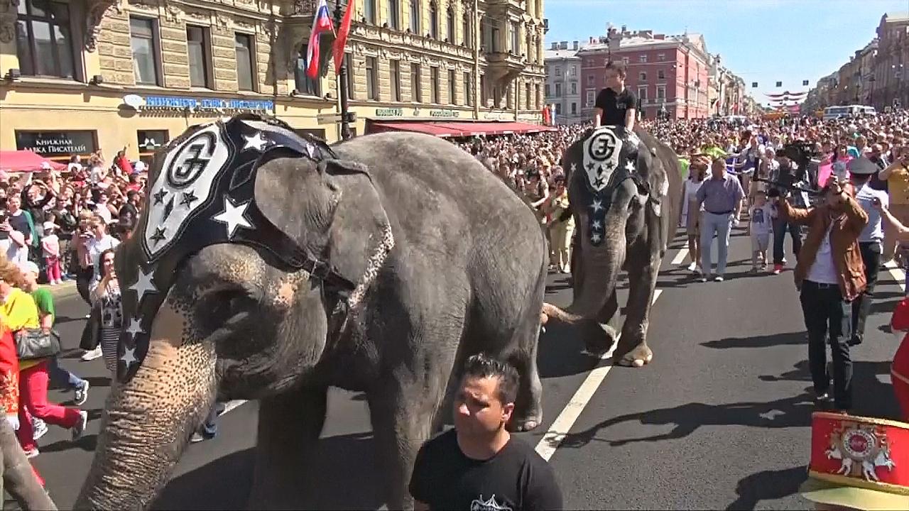 Слоны на Невском: как в Санкт-Петербурге отмечали День города