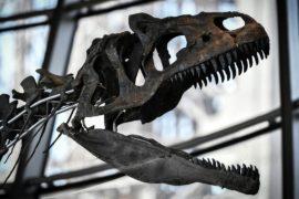 Скелет динозавра неизвестного вида ушёл с молотка за 2 млн евро