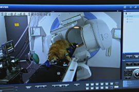 В Австралии появилась онкологическая клиника для животных
