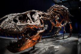 Один из самых полных скелетов тираннозавра выставили в Париже