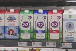 Фермеры призывают пить молоко А2 с «правильным» белком