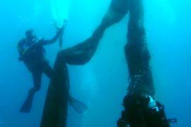 Дайверы поднимают со дна брошенные сети и спасают морских животных